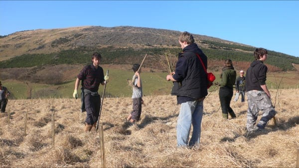 Volunteers planting trees in the Cambrian Mountains