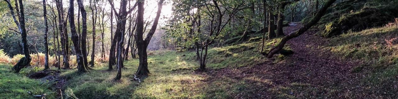 Wood Pasture Bwlch Corog