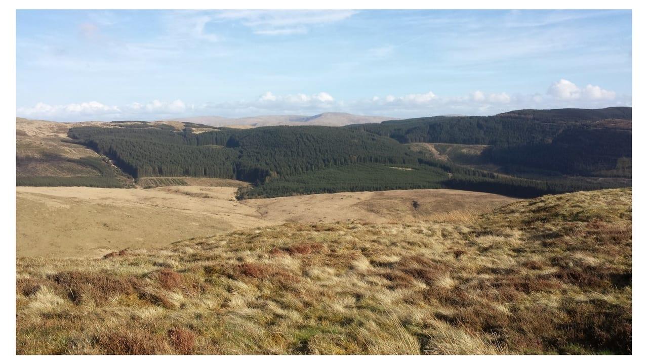 Forestry Cwm Einion
