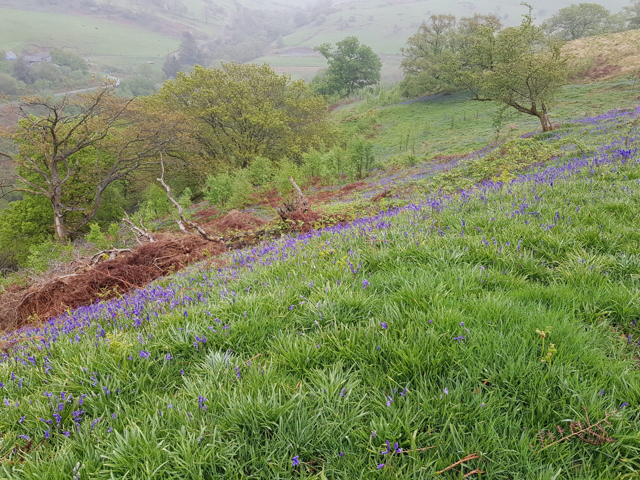 Open land with bluebells