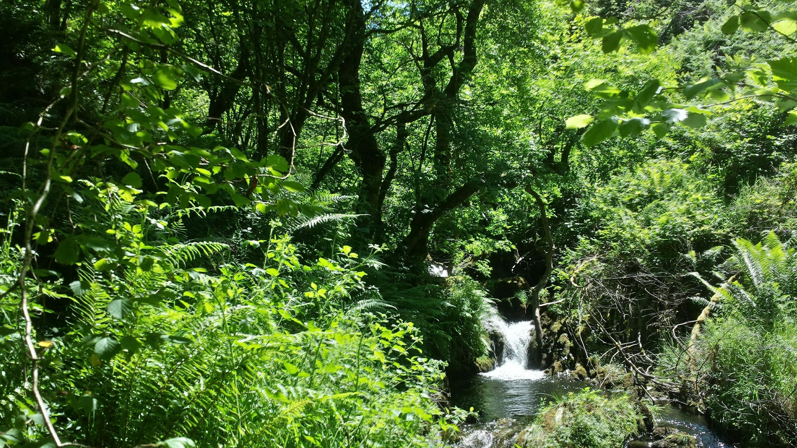 Llechwedd Einion waterfall