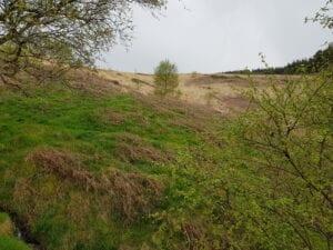 Tree regeneration May 2021